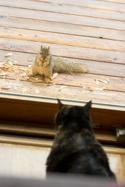 Coco and the squirrel having a pre-chase stare down.